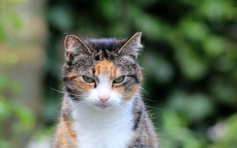 老猫应该吃哪些食物?
