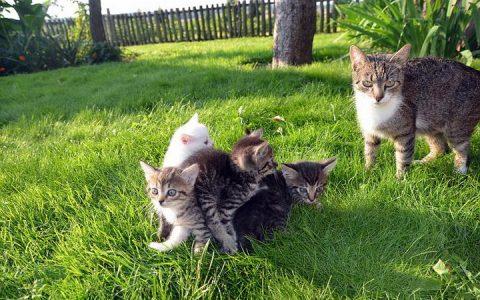 猫咪每天都在家干嘛?一般要做五件事