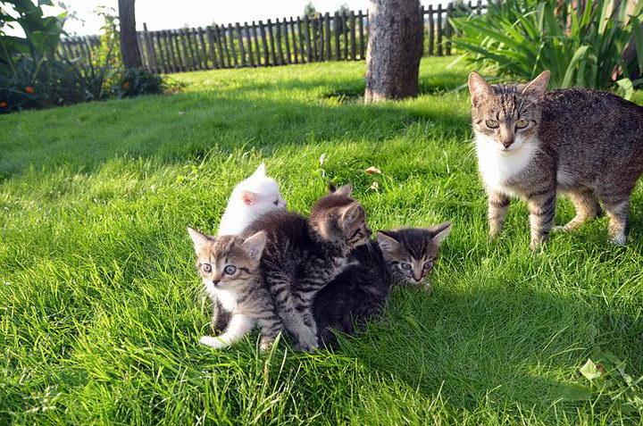 猫咪每天都在干嘛