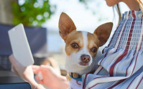 狗狗不愧是人类的朋友:也能感受到我们的情绪