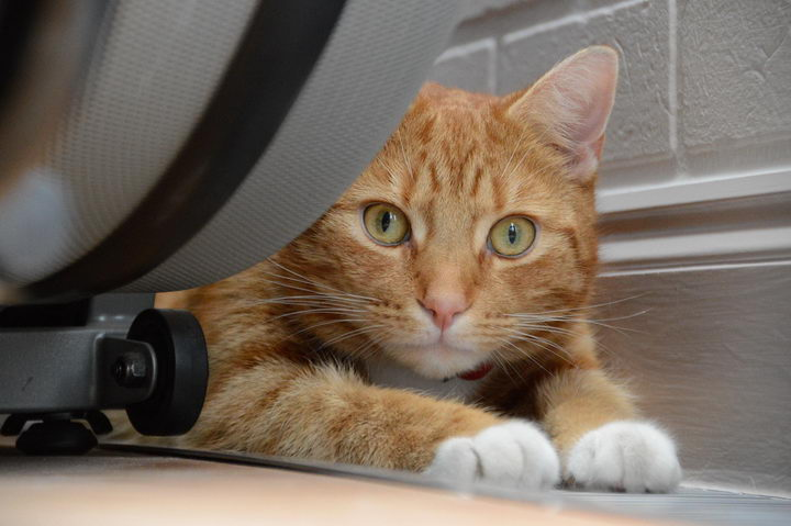猫咪尿频和多尿的原因和解决办法