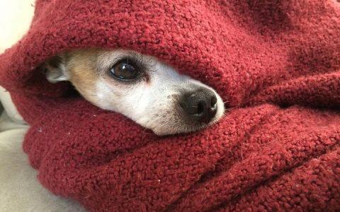 在寒冷的冬天遛狗有哪些需要注意的事情?