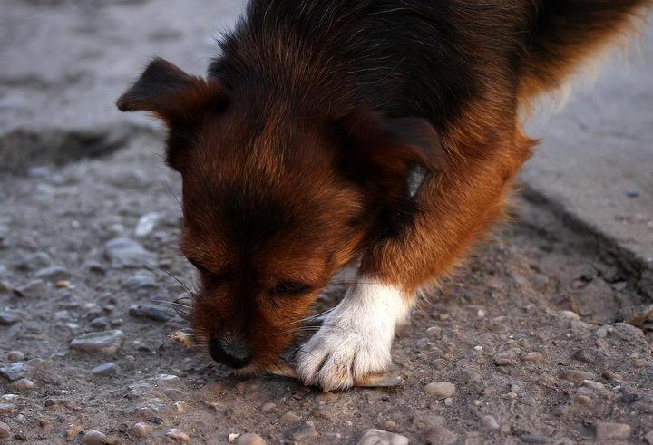 秋冬交替气温忽冷忽热,狗狗突然没有胃口怎么办?