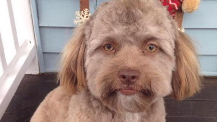 为什么狗狗有的时候会对着某处空气叫?难道是看到了什么不干净的东西?