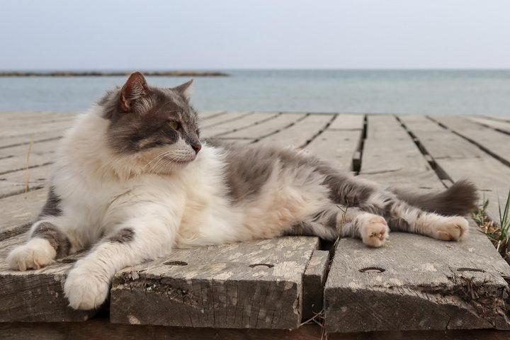 猫咪毛球症铲屎官应该如何正确应对?