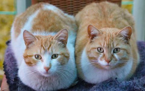 如何让新来的猫咪跟原住民宠物和平共处