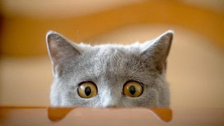 猫咪能看见鬼么?为什么猫会盯着一个地方看?