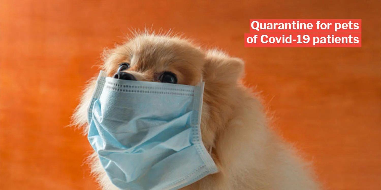 新型冠状病毒肺炎会通过宠物传染给人么?