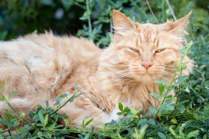 老猫的日常照顾注意事项