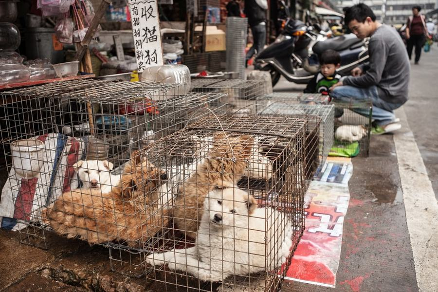 深圳市5月1号以后禁食宠物猫和宠物狗