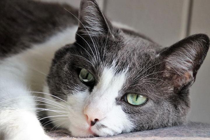 哪些原因会导致猫咪尿结石?