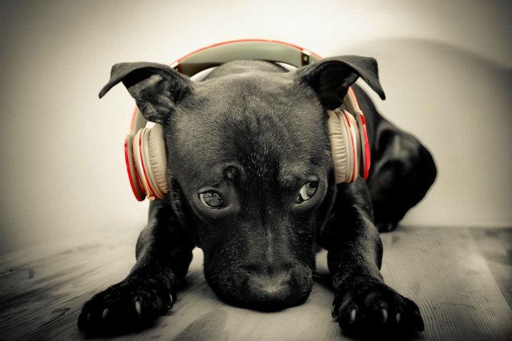 什么样的音乐能够让狗狗平静下来,比较适合宠物狗听?