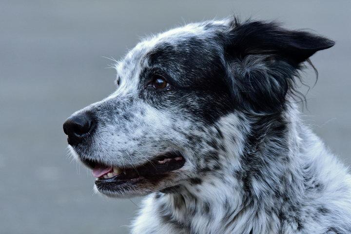家里养狗总是有一股狗狗的味道怎么办?