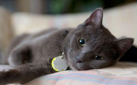 室内养猫让猫咪保持健康和快乐的4个要点