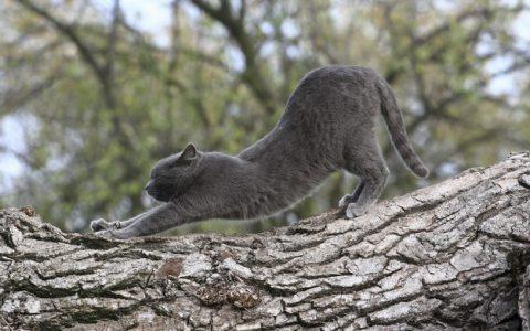猫咪为什么要伸懒腰?