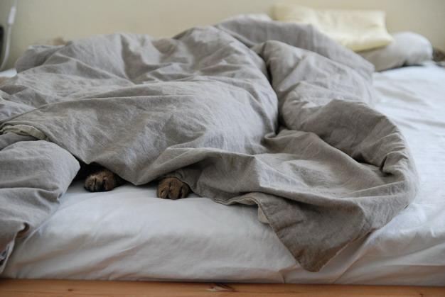 为什么猫咪总是在床上尿尿?