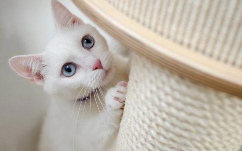 """打是亲骂是爱,为什么猫咪越""""打""""反而越粘人"""