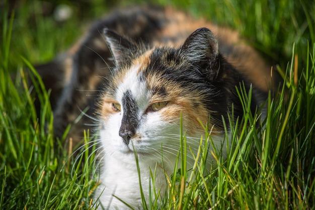 猫咪应该多久驱虫一次?