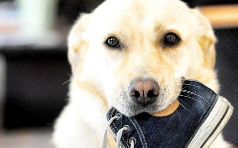 过早绝育对狗狗有哪些坏处?
