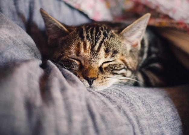 年轻猫咪换季护理注意事项