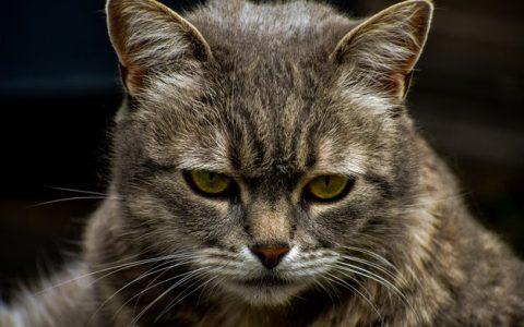 老年猫咪换季护理注意事项