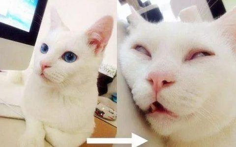 猫咪睡觉时候翻白眼正常么?