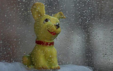 """梅雨时节家里的宠物猫咪和狗狗如何防止""""发霉"""""""