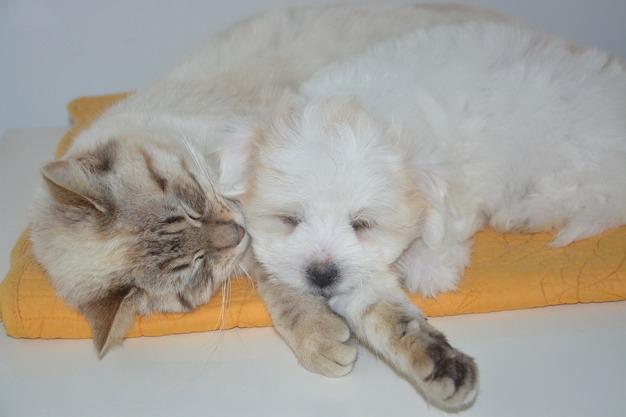 宠物猫咪和狗狗耳螨(耳疥虫)的预防治疗
