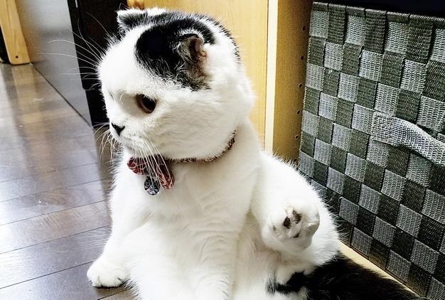 ▲如果发现宠物有搔抓耳朵的情形可能就是一种警告,要多加观察注意!