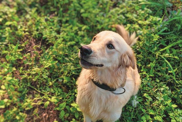 ▲维持猫咪狗狗的耳朵健康,应从日常清洁习惯开始培养。