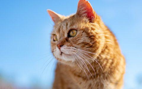猫咪慢性肾病的护理