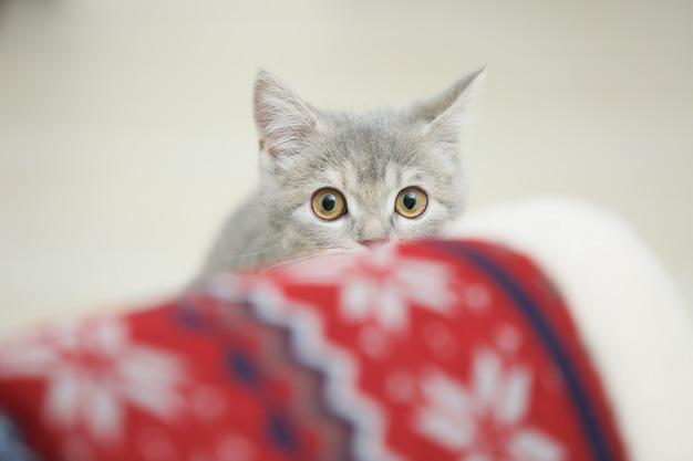 ▲不是每只猫都适合做亲近人的训练,要视受训猫咪的各别状况。若是猫咪原本就不亲人,建议不要勉强它比较好。