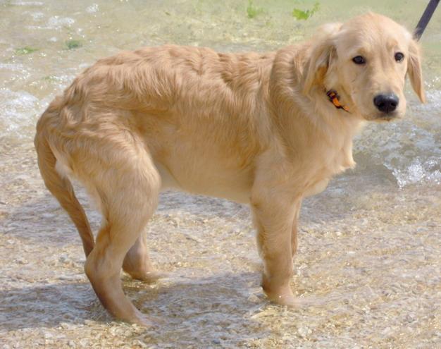 铲屎官平日应多加留意狗狗的行为表现,如有尾巴垂下来、蜷缩患部等情形,有可能是狗狗正在疼痛。