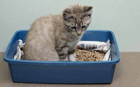 每天清理猫砂还是很臭,三种方法教你让猫砂不再有臭味