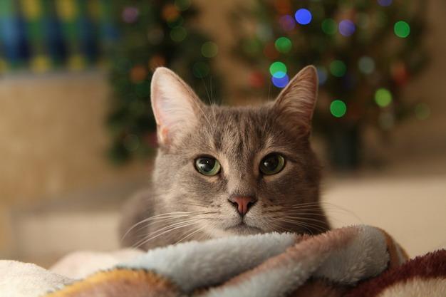 带猫咪搬家有哪些注意事项?