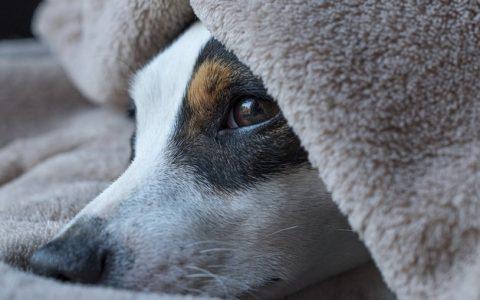 狗狗常见的一些健康医疗花费