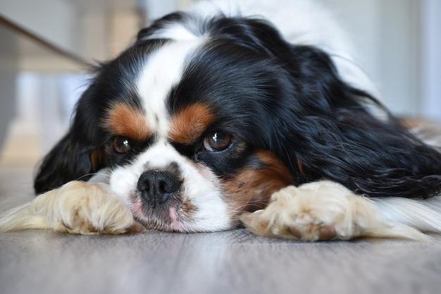 宠物美容不仅仅是修剪毛发,还能预防和发现疾病