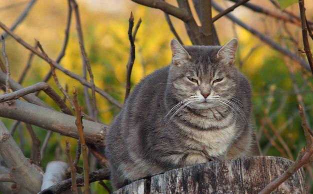 猫咪突然不吃东西,小心是脂肪肝