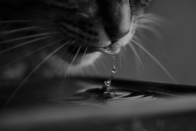 为啥喂猫咪吃湿猫粮,它还是得了尿结石?