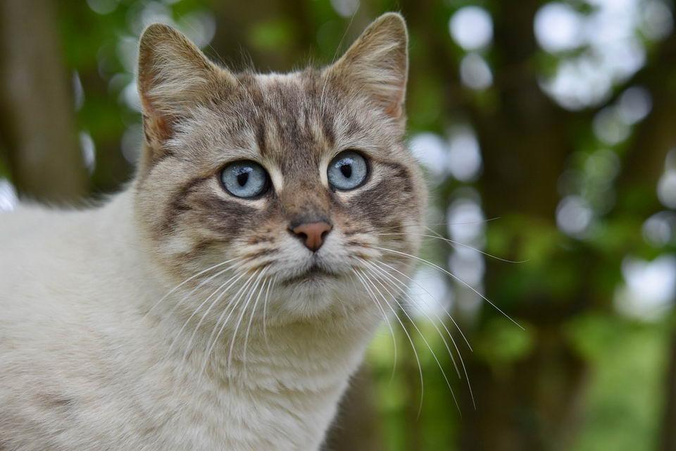 早期肾病猫咪如何照顾:注重营养搭配,延缓肾病