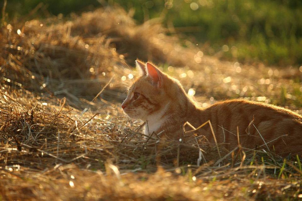 猫咪感冒后打喷嚏流鼻水,小心是病毒性鼻气管炎