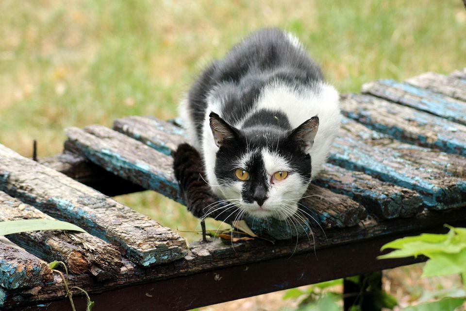 带你了解猫咪的心脏病