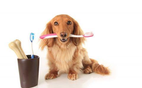 简单4个步骤,让狗狗爱上刷牙