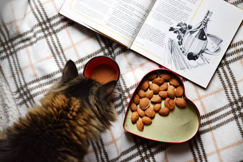猫咪需要补充益生菌吗?什么情况下猫咪适合补充益生菌呢?五分钟带你快速了解!