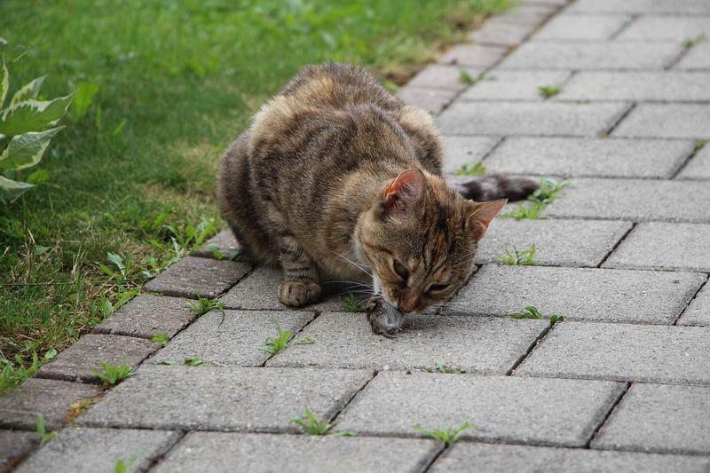 到底能不能给宠物猫咪和狗狗喂生肉?
