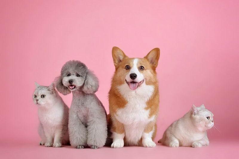 过敏性皮肤炎该怎么办?猫咪狗狗的日常皮肤保养措施