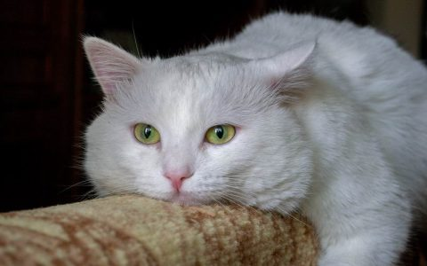 5种常见的猫咪呕吐:具体情况具体分析该如何处理