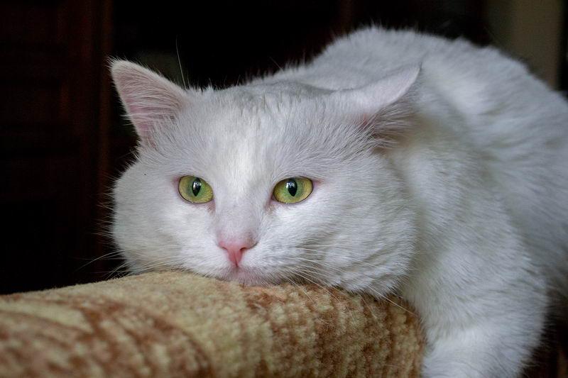 """种常见的猫咪呕吐:具体情况具体分析该如何处理"""""""