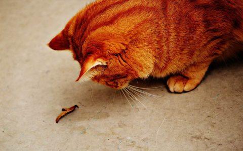 关于猫咪导致的人体过敏的14个问题