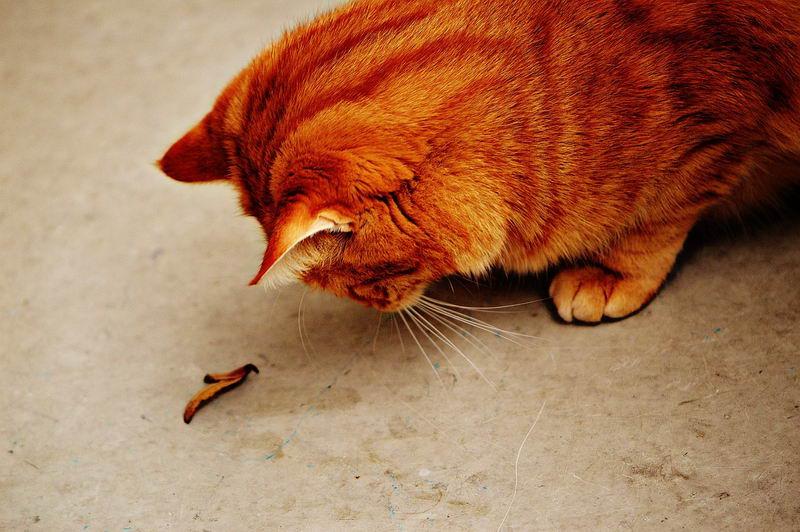 猫咪不会是过敏的单一原因,也有可能是食物本身、或是环境中的尘螨落在猫身上,而导致铲屎官过敏